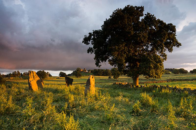 Nine Stones Close and Tree