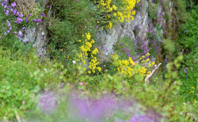 Haddon Flowers