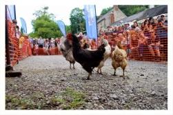 World Championship Hen Racing