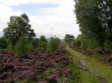 Path across Stanton Moor