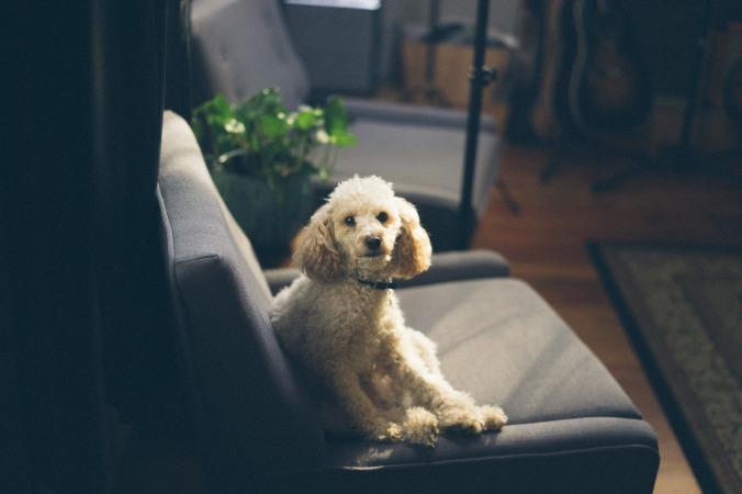 dog-1209940_1920
